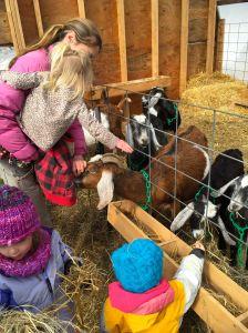 nn goats