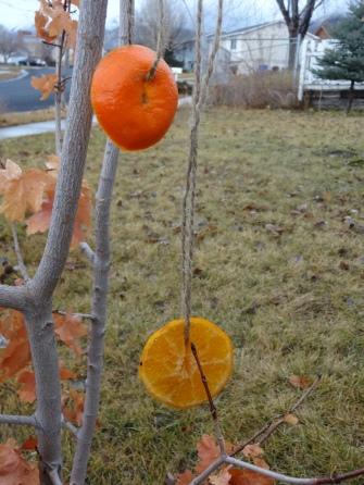 bird oranges